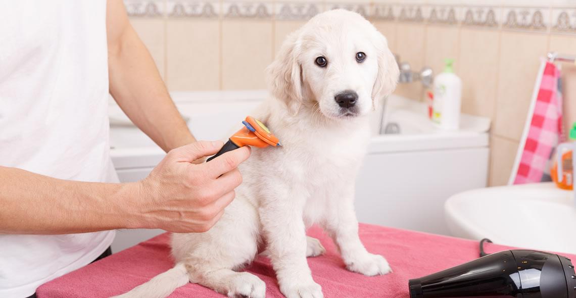 Complete Animal Care Course