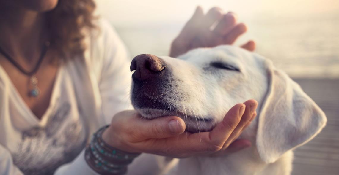 Canine Communication Diploma