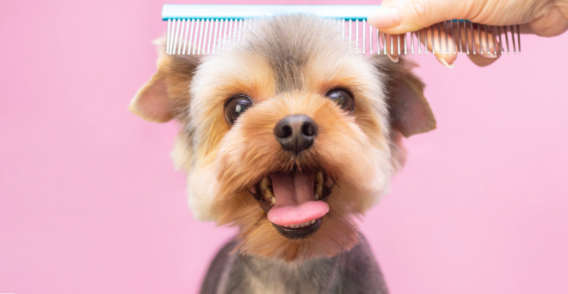 Dog Grooming Diploma