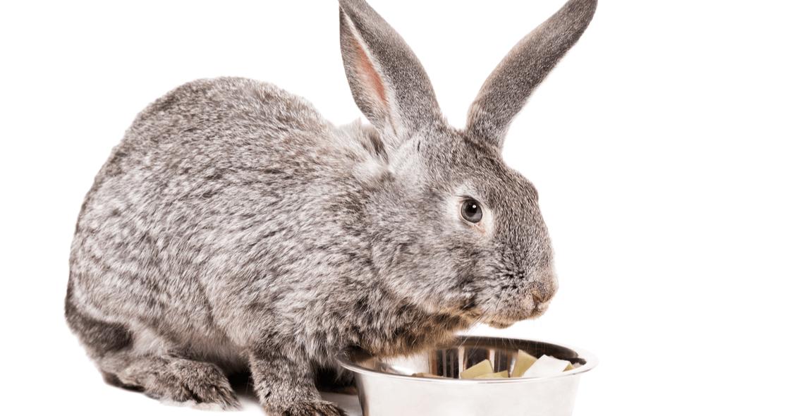 Rabbit Care Certificate