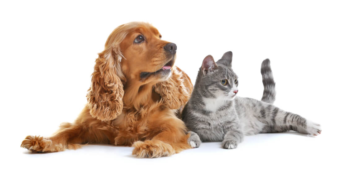 Introduction to Kennel and Cattery Management Certificate