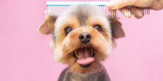 Dog Grooming Diploma Course