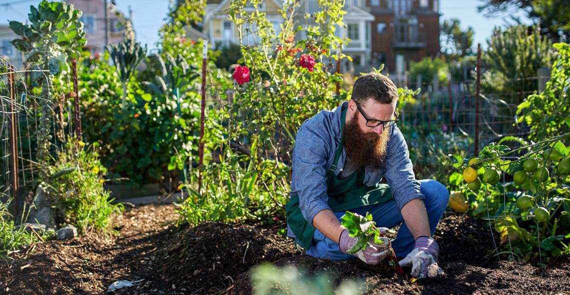 Urban and Zen Gardening